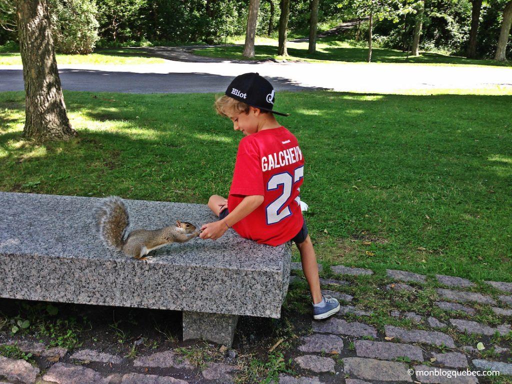 Découvrir Road Book Montreal Ecureuil gris monblogquebec