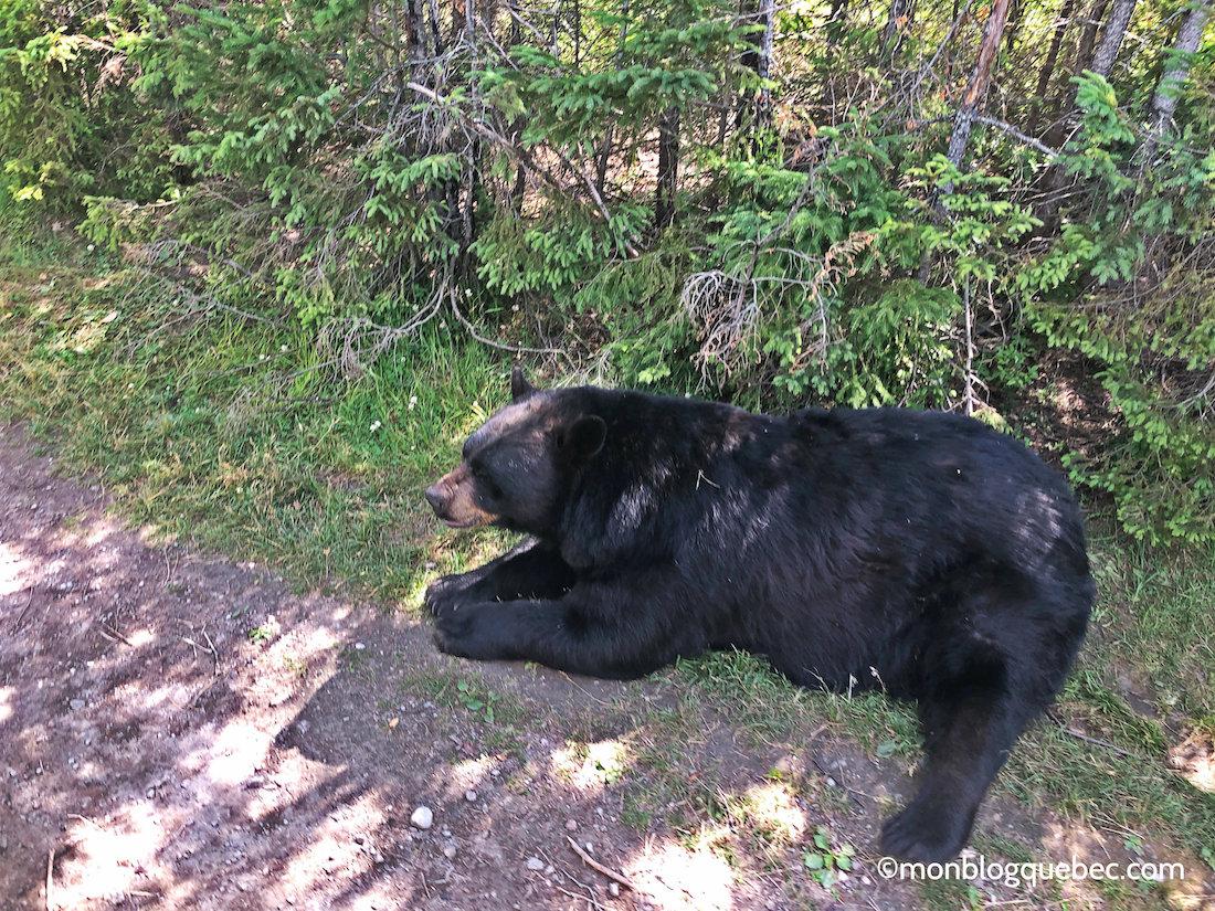 Voyage au Saguenay Lac Saint-Jean Zoo St Félicien