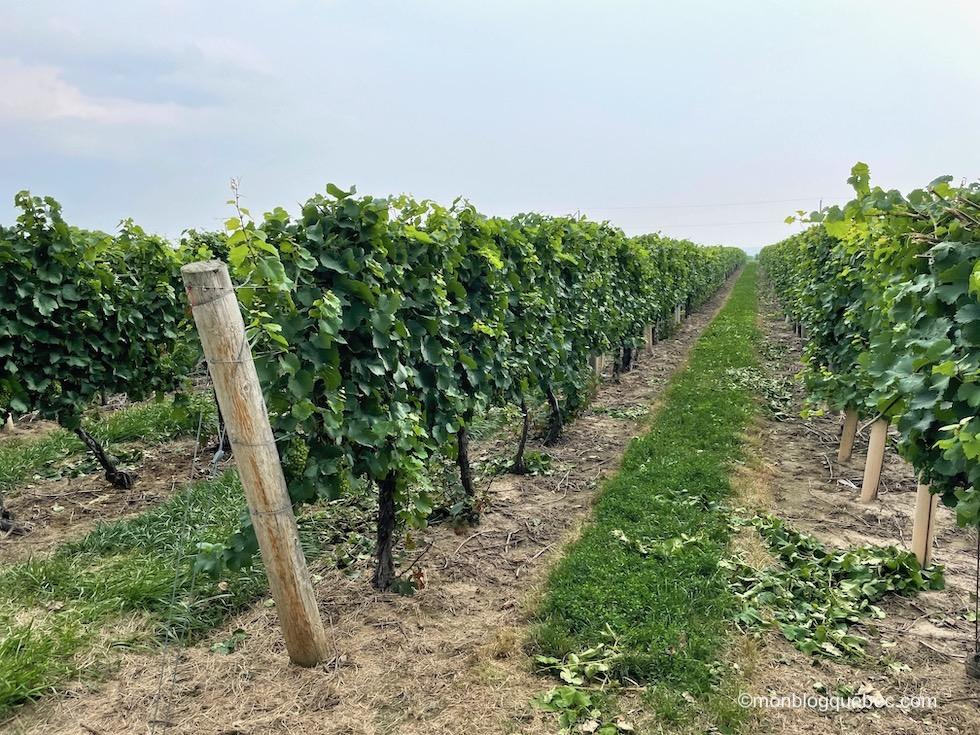 Incontournables en Ontario Vignobles