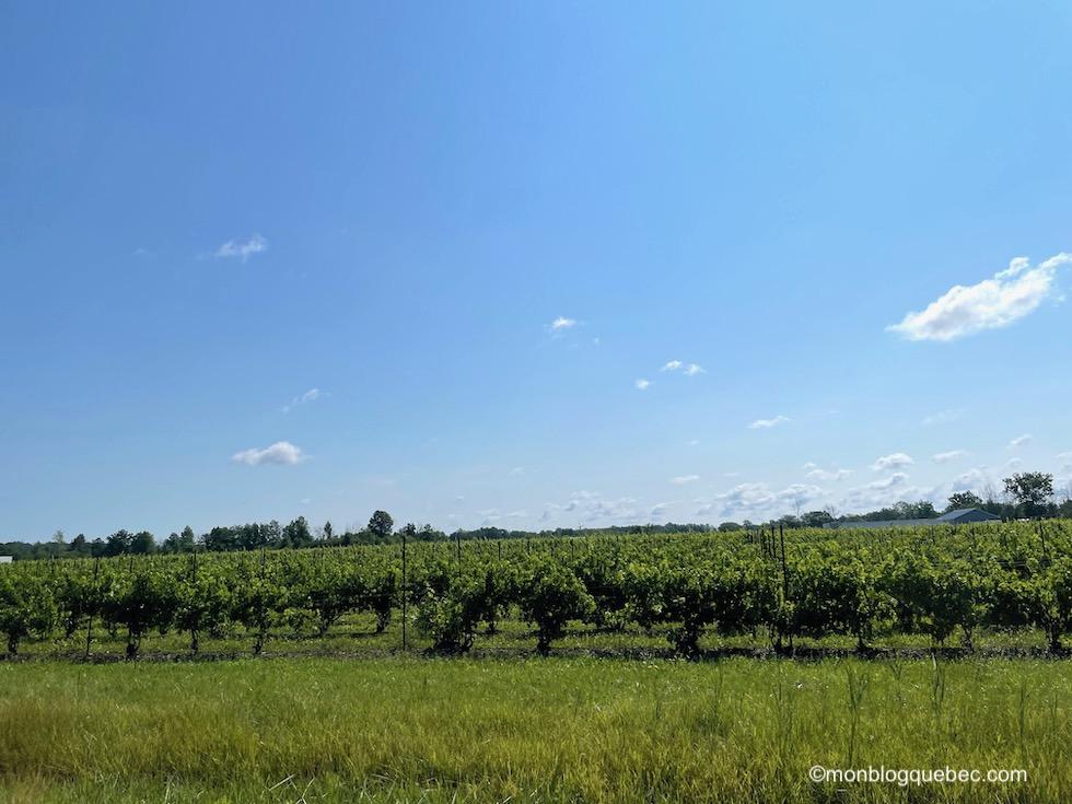Incontournables en Ontario Vignes
